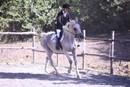 Il benessere dal cavallo corre su gomma riciclata da Pneumatici Fuori Uso
