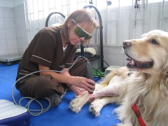 Versatile, Trasversale, Senza Confini: la Laserterapia MLS® in Veterinaria