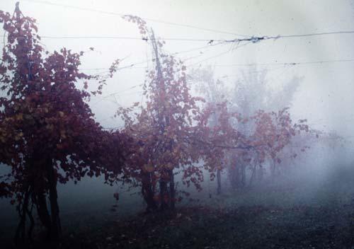 Domenica 9 novembre è San Martino in 12 cantine in Emilia Romagna