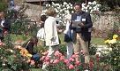 Colori e fraganze: Roma premia la rosa più bel mondo - La Repubblica