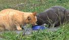 Red e Willy, come una coppia: più che amici, gatti inseparabili - La Repubblica